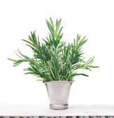 Green Rosemary in old metal bucket on white wooden table, isolated — Stock Photo