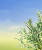 Rosemary twigs border on summer background with blue sky — Stock Photo