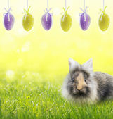 Easter eggs and fluffy gray hare on  green grass — Foto Stock