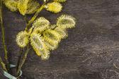 Sauce amarillo con verde arco en madera vieja — Foto de Stock