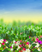 Bright flowers in summer garden — Stock Photo