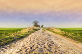 Old cobbled road in green fields at sunset,landscape, background — Stock Photo