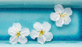 White flowers in  blue bowl of water, spa,banner — Stock Photo