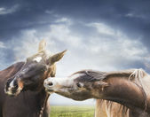Two horses playing close-up on background cloudy sky — Stock Photo