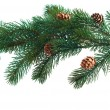 Pine cones with pine branches. Cone and christmas tree isolated  — 图库照片