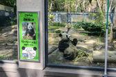 Panda in Ueno Zoo In Tokyo, Japan — Stock Photo
