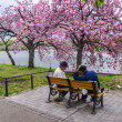 Two men playing chess under the cherry blooming tree In Tokyo, Japan — Stock Photo #49570867