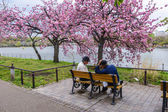 Two men playing chess under the cherry blooming tree In Tokyo, Japan — Stock Photo