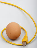 Egg connected — Stock Photo