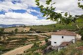 Terraced vineyards in Douro Valley — Stock Photo