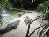 Crocodiles on the shore of an island paradise — Stock Photo