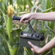 Measuring radiation levels of corn — Stock Photo #23580575