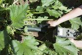Measuring radiation levels of zucchini — Stock Photo
