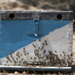 Beehive — Stock Photo #24349405