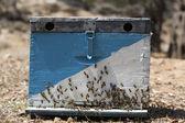 蜂巢 — 图库照片