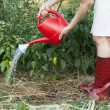 Stock Photo: Vegetable garden watering