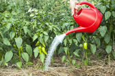 Vegetable garden watering — Stock Photo