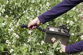 Medir os níveis de radiação de legumes — Foto Stock