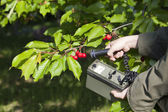 Measuring radiation levels of fruits — Stock Photo