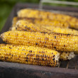 Grilled corn — Stock Photo #24723981