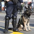 Stock Photo: Police dog