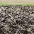 Plowed field — Stock Photo #24794961