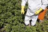 распыление пестицидов — Стоковое фото