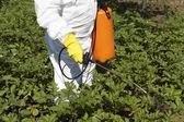 Pesticide spraying — Stock Photo