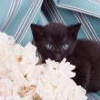 Cute black kitten with flower — Stock Photo