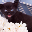 Cute black kitten with flower — Stock Photo #26791303