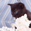 Cute black kitten with flower — ストック写真