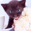 Cute black kitten with flower — Stok fotoğraf