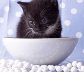 Sevimli siyah yavru kedi kolye — Stok fotoğraf