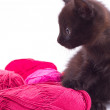 Black kitten with yarn isolated on white background — Stock Photo