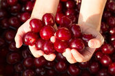 Cherry in hand — Stockfoto