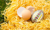 Broken eggs in grass — Stock Photo