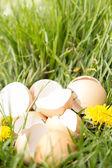 草で壊れた卵 — ストック写真