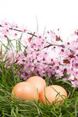 Eggs in grass with flower on white — Stock Photo