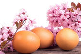 Eggs with spring flower on wooden background — Stock Photo