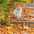 Cat on the leaves — Stock Photo