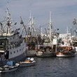 Fisherman's fleet in Zadar harbour - Stock Photo