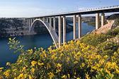 Krka bridge behind the broom flowers — Stock Photo