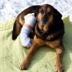 Sick dog, dog shot, — Stock Photo #22113559