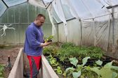 Gardener in a greenhouse, floriculture — Stock Photo