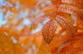 Raindrops on the leaves — Stock Photo