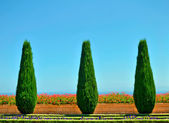 Beautiful trees and flowers in the Bahai Gardens — Stock Photo