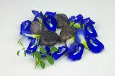 Modrý květ — Stock fotografie