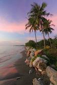 在海边的椰子树 — 图库照片