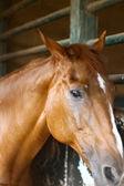 Häst — Stockfoto