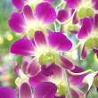 Stock Photo: Purple and green orchid